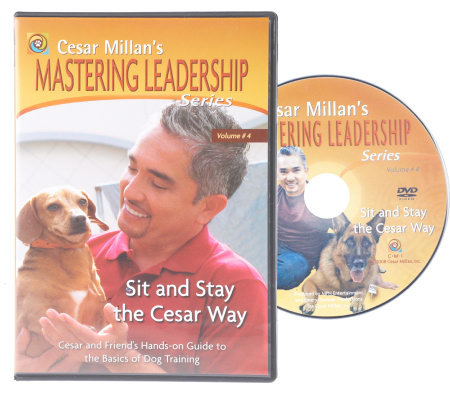 Training your dog and building a relationship with him are two different things. If you want more than a dog that merely responds to commands, then Cesar Millan's dog training DVD series can help you understand your dog and teach you how to fulfill his needs.