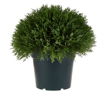 "National Tree Feel Real 15"" Globe Cedar Shrub w/Growers Pot - M49193"