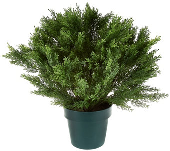 "National Tree Feel Real 22"" Globe Cedar Shrub with Growers Pot - M49194"