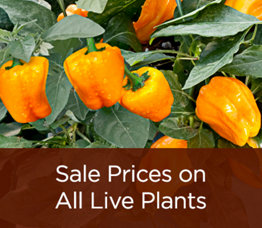 Sale Prices on All Live Plants