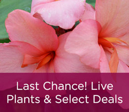 Last Chance! Live Plants & Select Deals