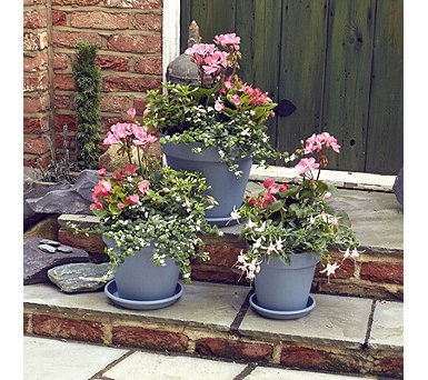 Plants2Gardens 12 x Garden Ready Summer Plants with 3 Planters & Saucers - 509936