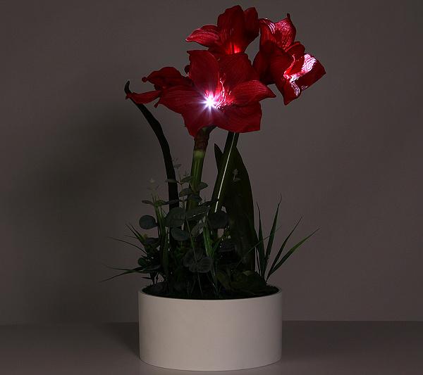 LUMIDA Flora Leuchtende Blumen Amaryllis weiße Schale & Timer Höhe ...