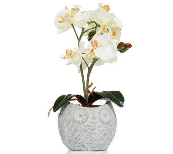 LUMIDA Flora Leuchtende Blumen Orchidee Im Topf Eulen Optik Timer, H. Ca.