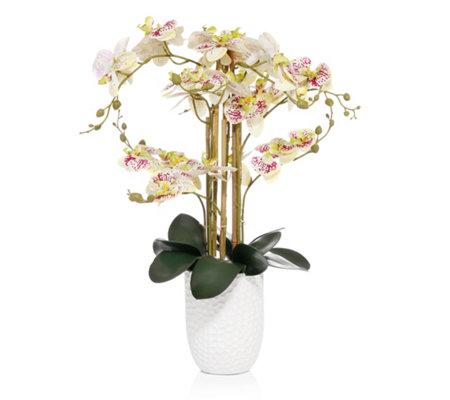 Abella Flora Orchidee Design Ubertopf Naturlicher Griff Hohe Ca