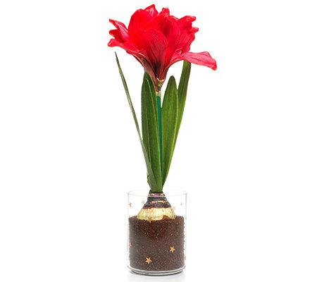 LUMIDA Flora leuchtende Blumen Amaryllis & Glas Timerfunktion H. ca ...