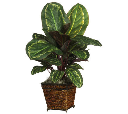 Maranta Plant W Basket By Nearly Natural