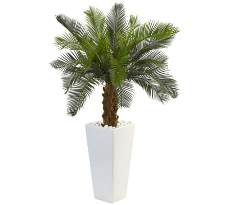 3 Cycas Tree In White Tower Planter By Nearlynatural