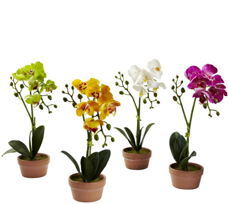 Set of 4 Phalaenopsis Orchids w/Clay Vase by Nearly Natural
