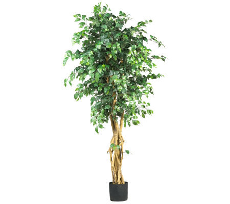 6' Multi-Trunk Ficus Tree by Nearly Natural