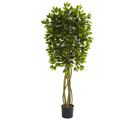 5-1/2' Indoor/Outdoor Ficus Tree by Nearly Natural