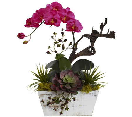 Orchid Succulent Garden With Planter By Nearly Natural