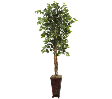 6-1/2' Ficus with Decorative Planter by NearlyNatural