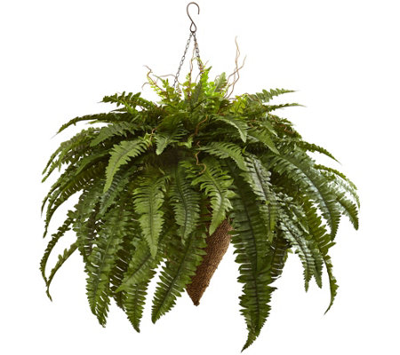 Giant Boston Fern In Hanging Basket By Nearly Natural