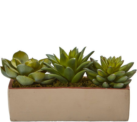 "5"" Mixed Succulent Pot by Nearly Natural"