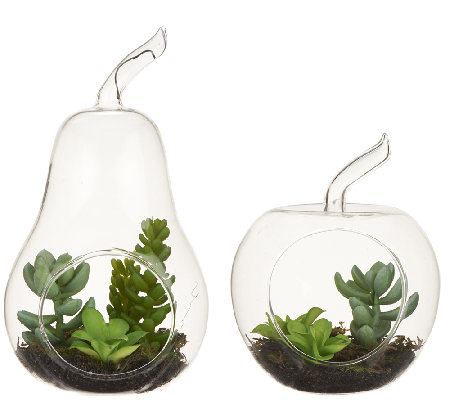 ED On Air Glass Apple & Pear Tabletop Succulents by Ellen DeGeneres