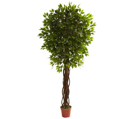 7.5' Ficus Tree by Nearly Natural