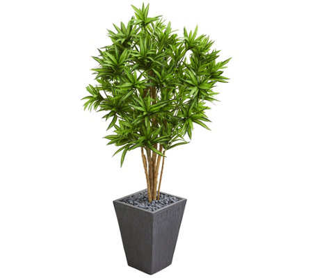 Dracaena Tree In Slate Finished Planter By Nearly Natural