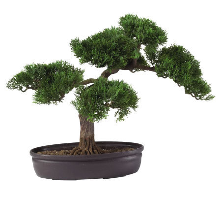 "16"" Cedar Bonsai Tree by Nearly Natural"