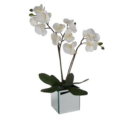Linda Dano Faux White Orchid In Mirrored Vase Page 1 Qvc