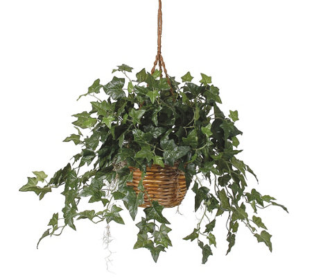 English Ivy Hanging Basket Silk Plant by NearlyNatural