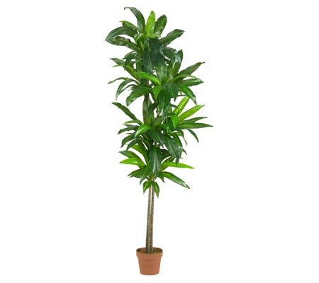 6' Dracaena Silk Plant by Nearly Natural
