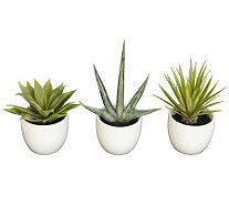 Set of 3 Southwest Collection Agave Plants byNearly Natural - H357342