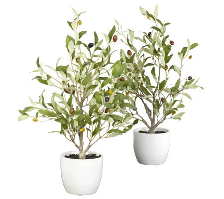 "18"" Set of 2 Olive Tree with Vases by Nearly Natural"