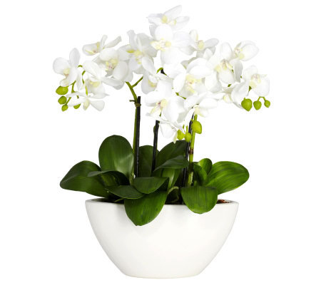 Phalaenopsis Flower Arrangement by Nearly Natural
