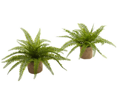 Boston Fern with Burlap Planter Set of 2 by Nearly Natural
