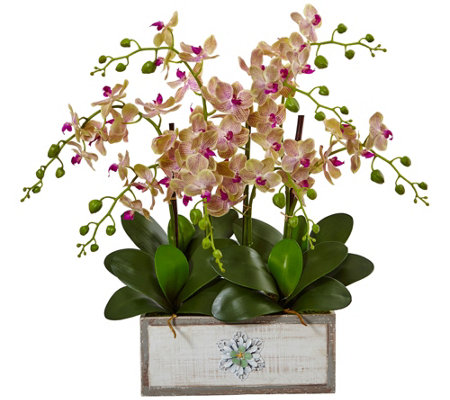 Phalaenopsis Orchid Arrangement In Vase By Nearly Natural