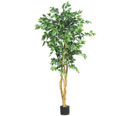 5' Ficus Tree by Nearly Natural