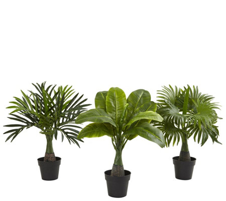 Areca, Fountain & Banana Palm (Set of 3) by Nearly Natural
