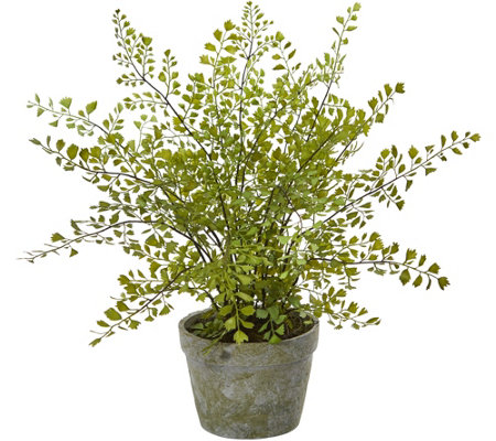 Maiden Hair Plant in Decorative Planter by Nearly Natural