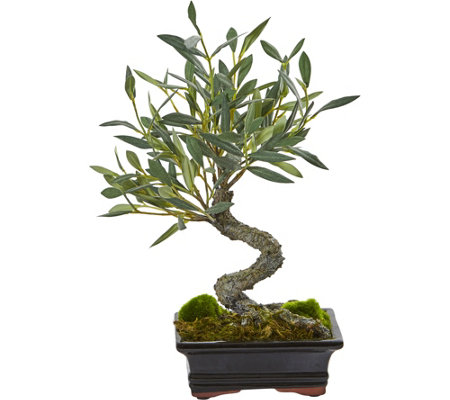 Mini Olive Artificial Bonsai Tree by Nearly Natural