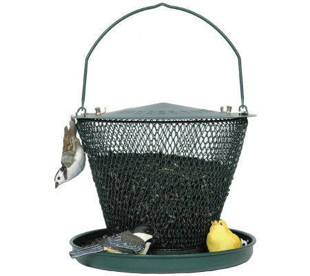 No/No Tray 2.5 lb Bird Feeder in Forest  Green