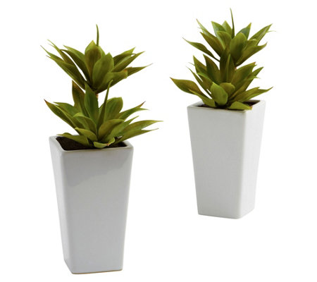 Double Mini Agave With Planter Set Of 2 By Nearly Natural