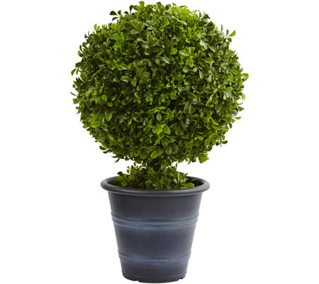 "23"" Boxwood Ball Topiary by Nearly Natural"