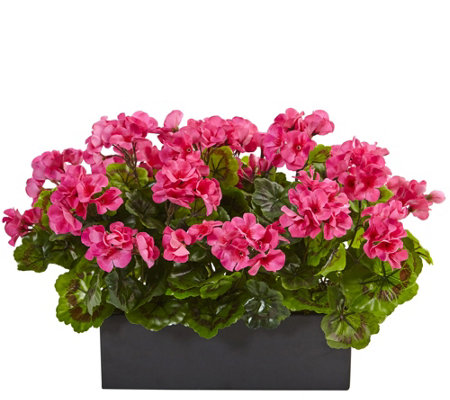 Geranium in Rectangular Planter by Nearly Natural