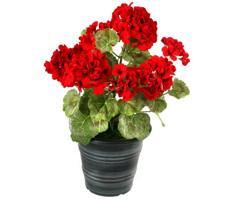 Potted Summer Geranium by Valerie