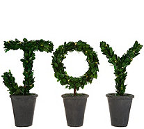 """As Is"" Scott Living 3-Pc.14"" Lit Preserved Boxwood ""JOY"" Topiaries - H215470"