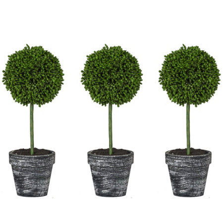 "Set of 3 9.5"" Boxwood Topiaries by Valerie"