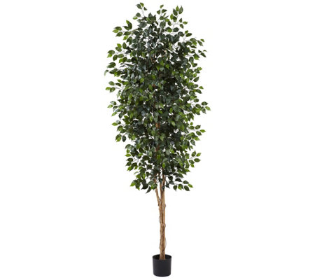 8' Ficus Silk Tree by Nearly Natural