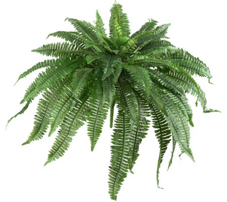 Set of 2 Boston Ferns by Nearly Natural