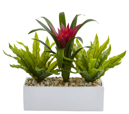 Bromeliad And Birdsnest In Planter By Nearly Natural