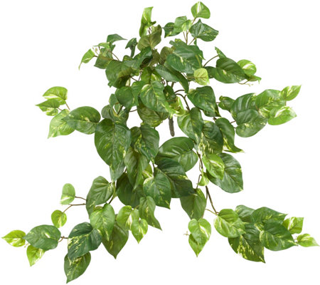 Set of 3 Pothos Hanging Plants by Nearly Natural