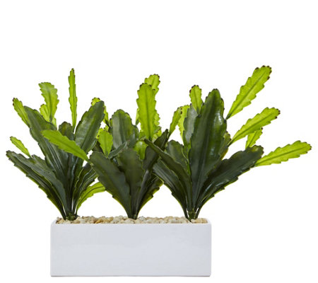 Cactus On Rectangular Planter By Nearly Natural