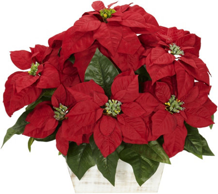 Poinsettia in White Wash Planter Arrangement byNearly Natural