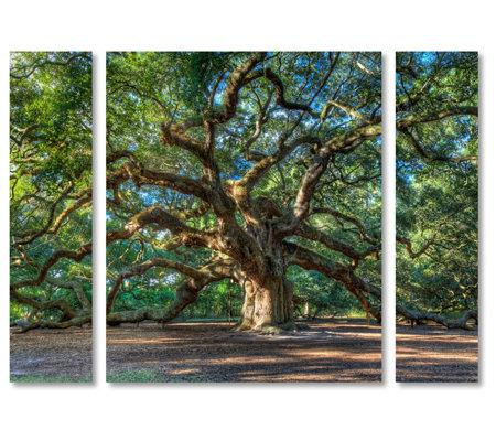Lavish Home Pierre Leclerc Angel Oak Charleston3 Piece Print