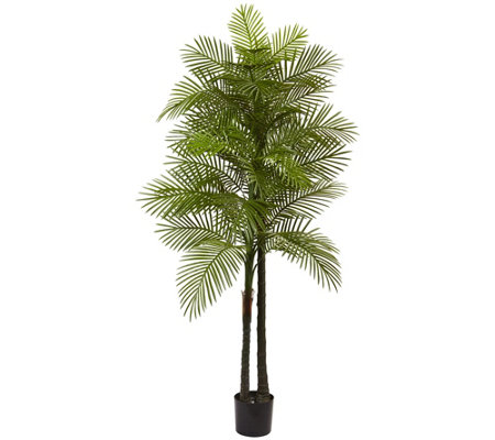 7' Tall Double Robellini Palm Tree by Nearly Natural